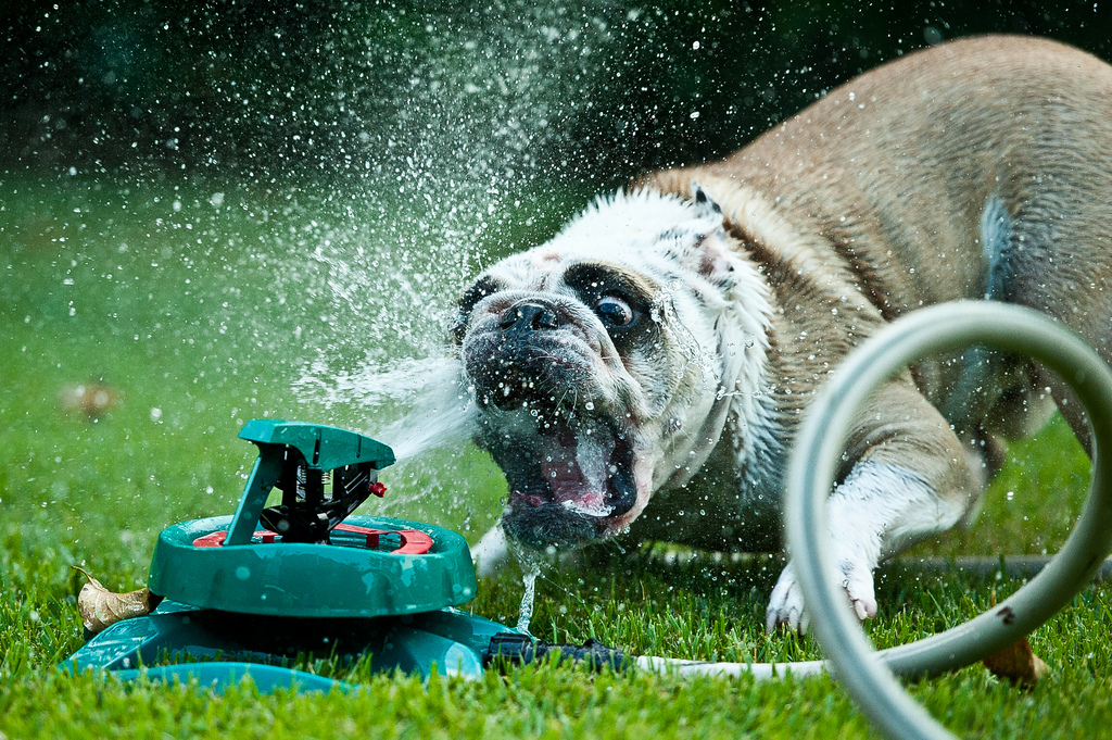 doggywater04 Радостная битва: собаки против брызг