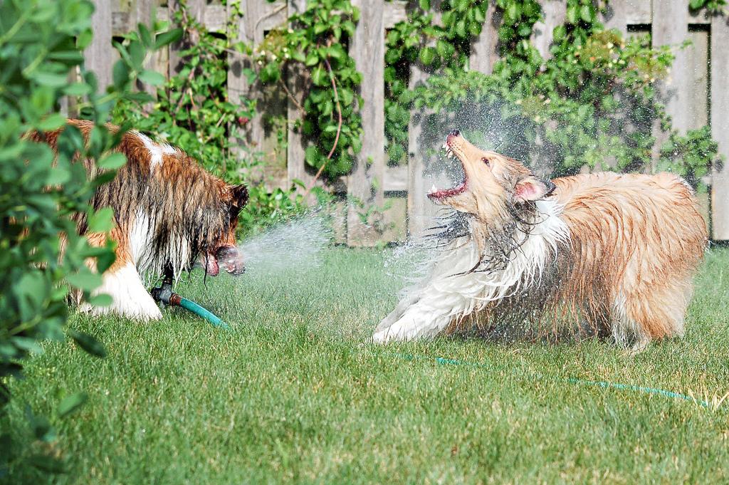 doggywater05 Радостная битва: собаки против брызг