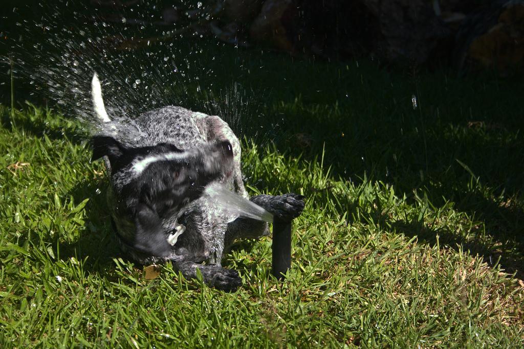 doggywater06 Радостная битва: собаки против брызг