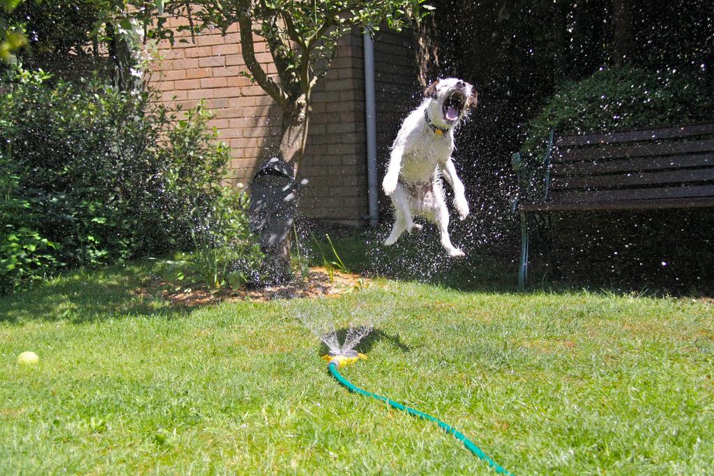 doggywater10 Радостная битва: собаки против брызг
