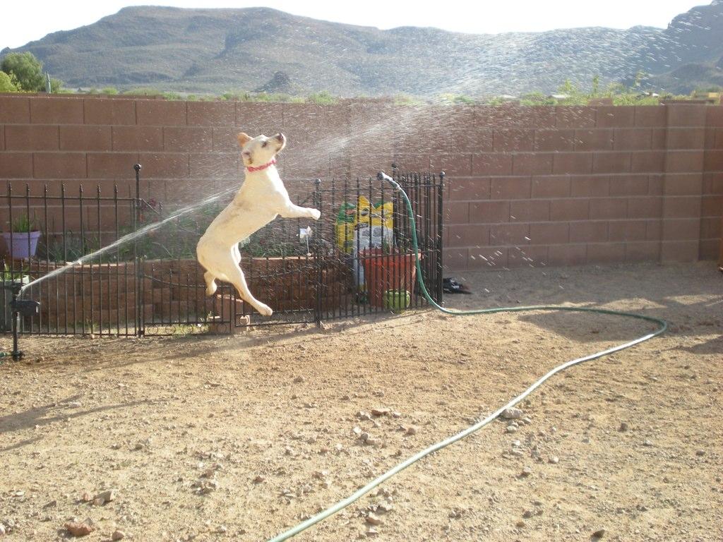 doggywater11 Радостная битва: собаки против брызг