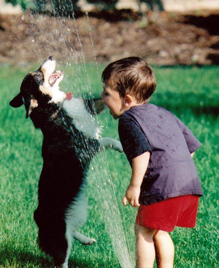 doggywater12 Радостная битва: собаки против брызг
