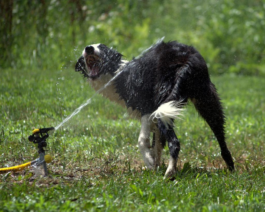 doggywater13 Радостная битва: собаки против брызг