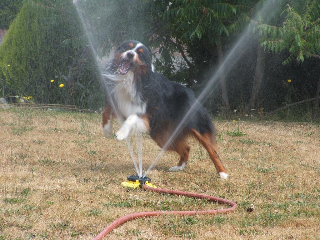 doggywater14 Радостная битва: собаки против брызг