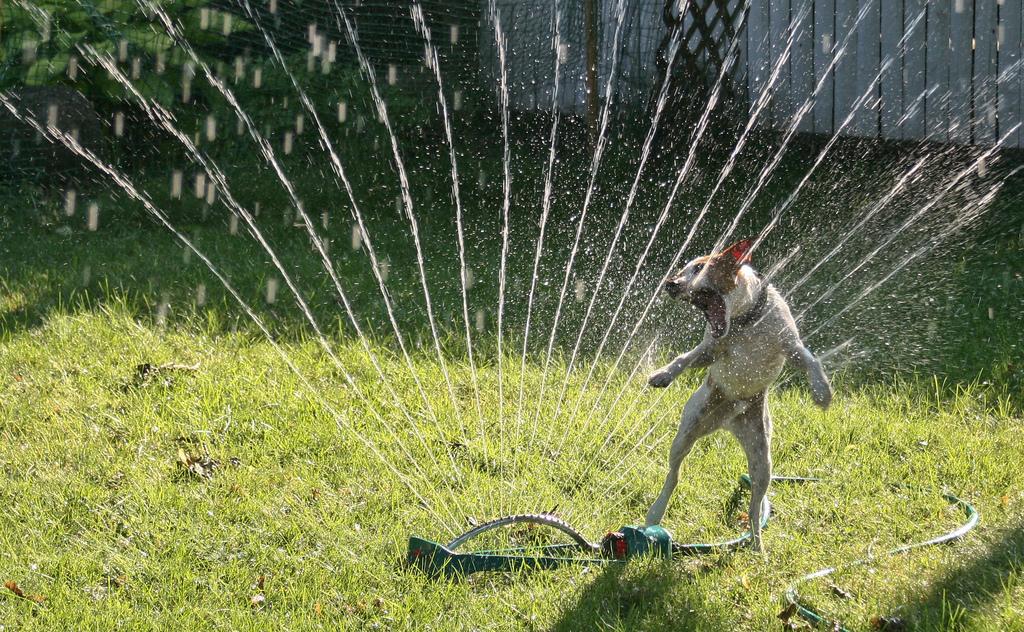 doggywater17 Радостная битва: собаки против брызг