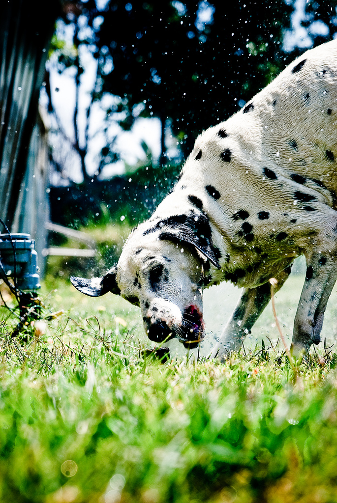 doggywater18 Радостная битва: собаки против брызг