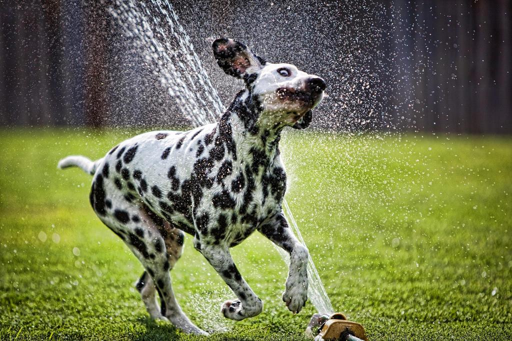 doggywater21 Радостная битва: собаки против брызг