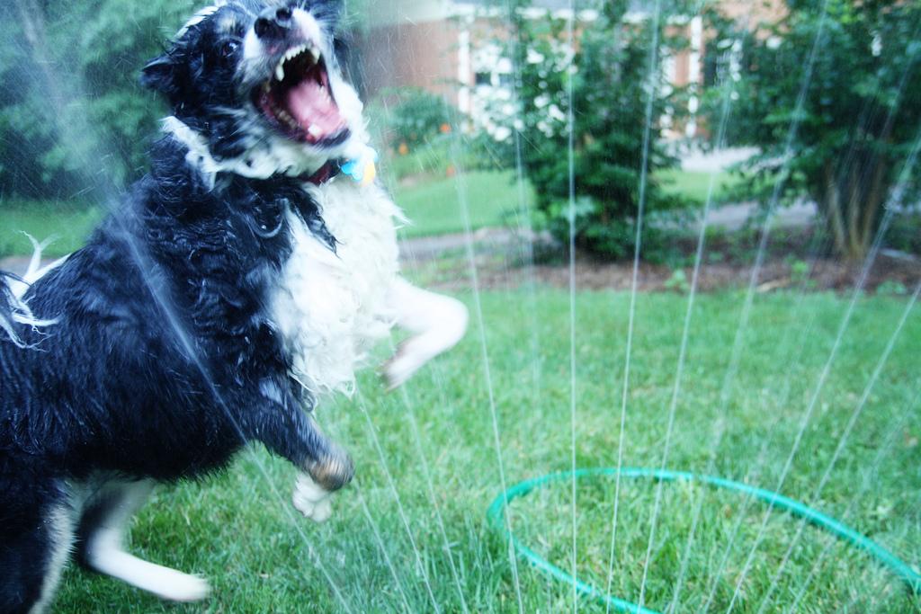 doggywater22 Радостная битва: собаки против брызг