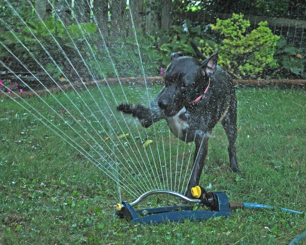 doggywater23 Радостная битва: собаки против брызг