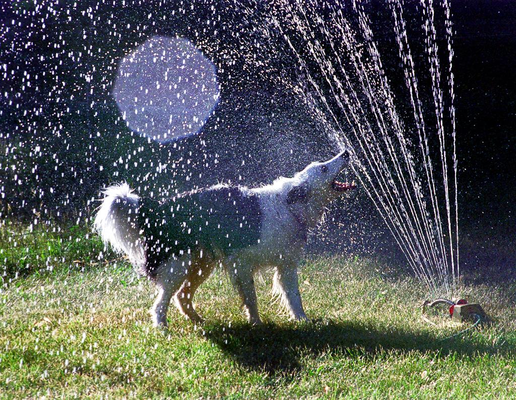 doggywater24 Радостная битва: собаки против брызг