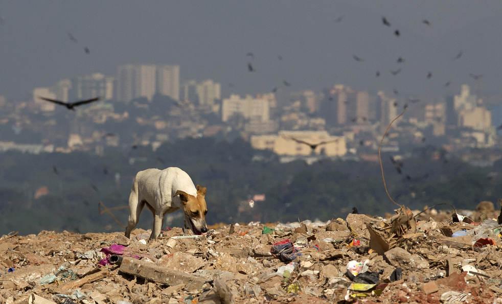 dumpster13 Закрытие гигантской свалки в Рио де Жанейро