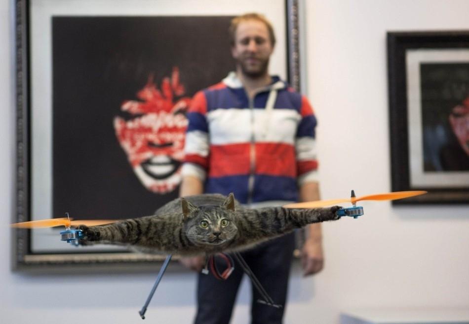 enhancee Летающий кот с моторчиками – ужас из Амстердама