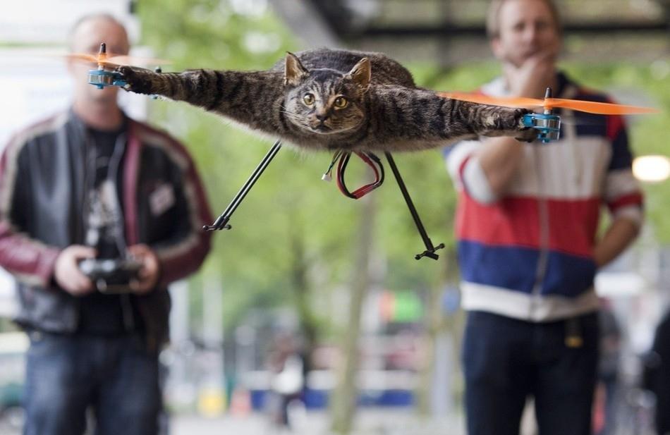 enhancef Летающий кот с моторчиками – ужас из Амстердама