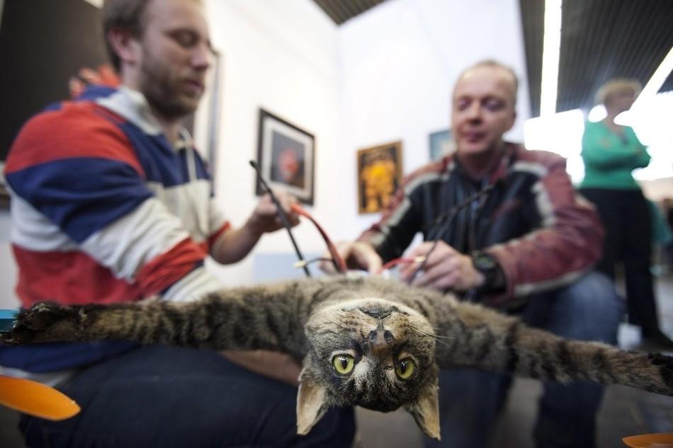 enhancei Летающий кот с моторчиками – ужас из Амстердама