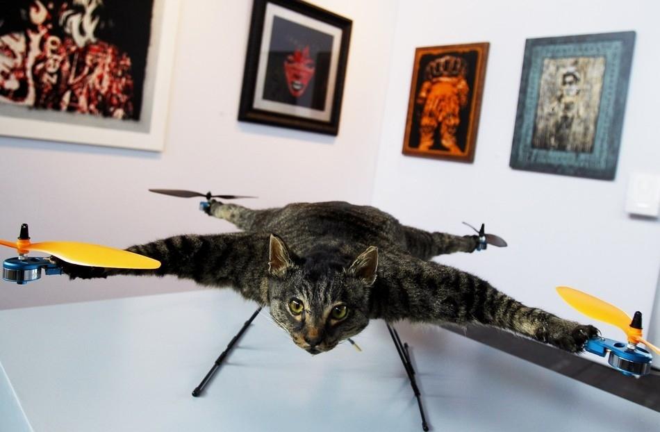 enhancek Летающий кот с моторчиками – ужас из Амстердама