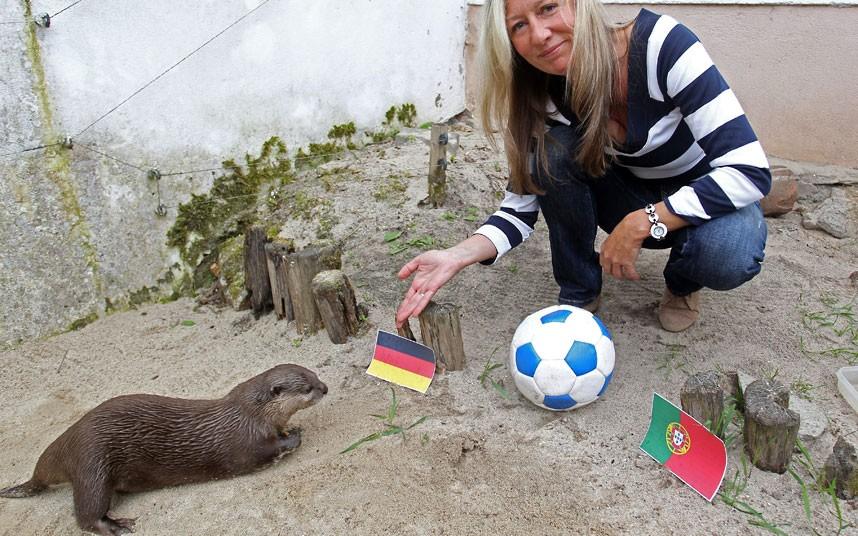 euro201201 Евро 2012: Кто станет преемником осьминога Пауля?