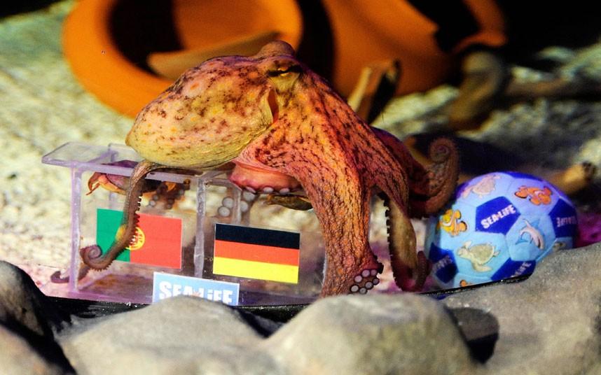euro201203 Евро 2012: Кто станет преемником осьминога Пауля?
