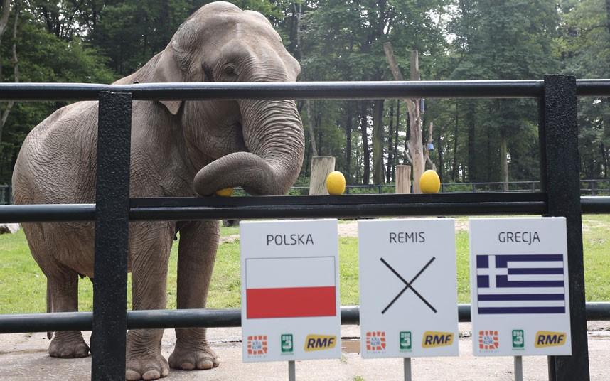 euro201204 Евро 2012: Кто станет преемником осьминога Пауля?