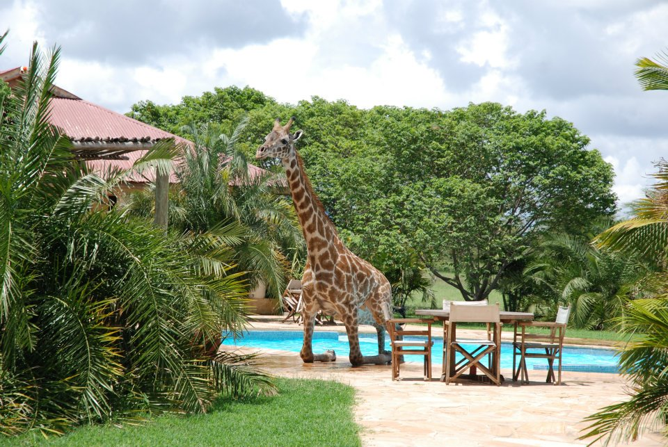 ezHjD Жираф искупался в бассейне