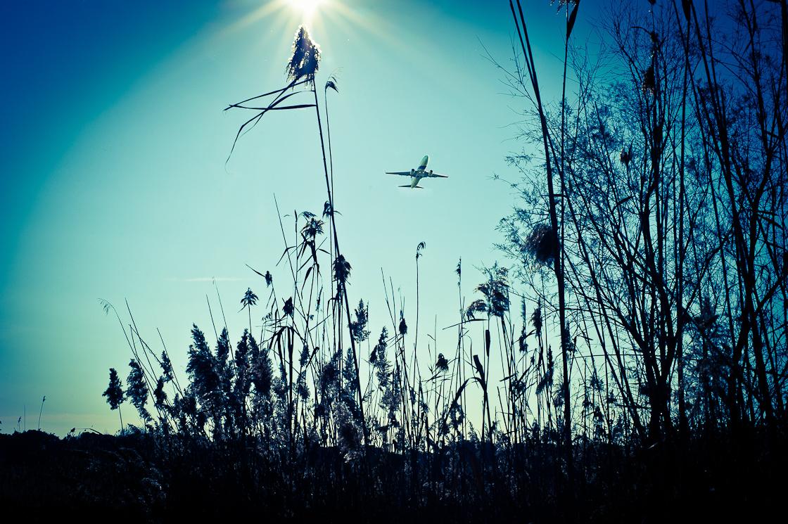 sarabias Охота за железными птицами