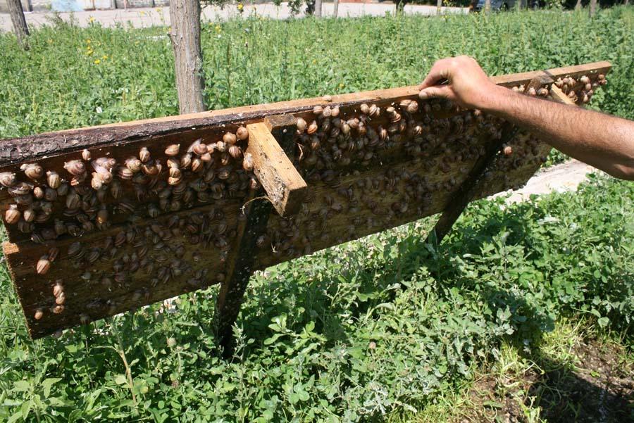 snail03 Ферма по выращиванию улиток