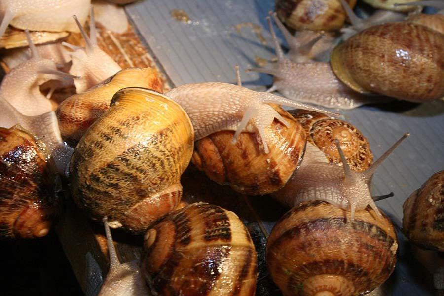 snail12 Ферма по выращиванию улиток