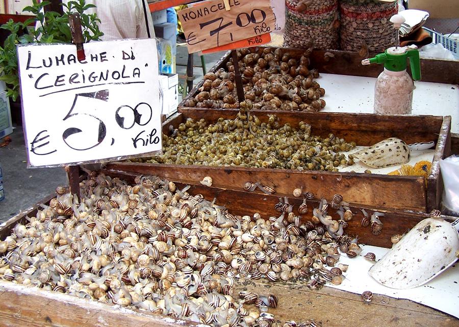 snail16 Ферма по выращиванию улиток