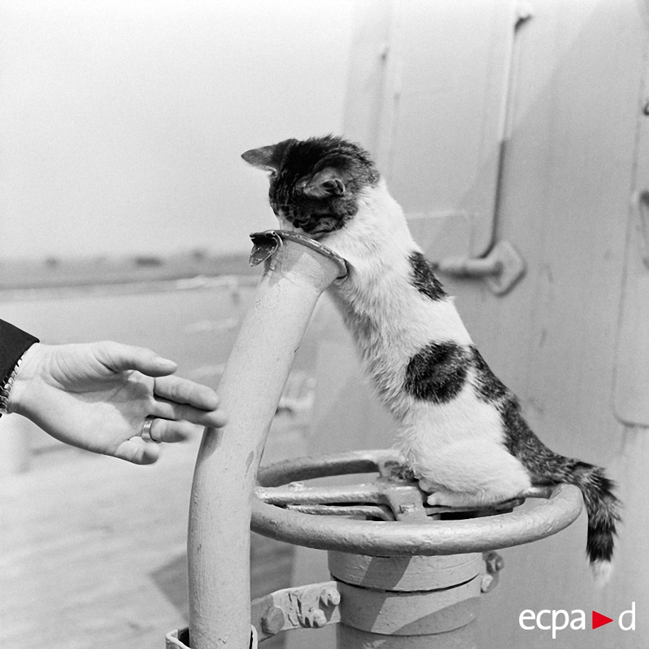 0425 Кошки на войне