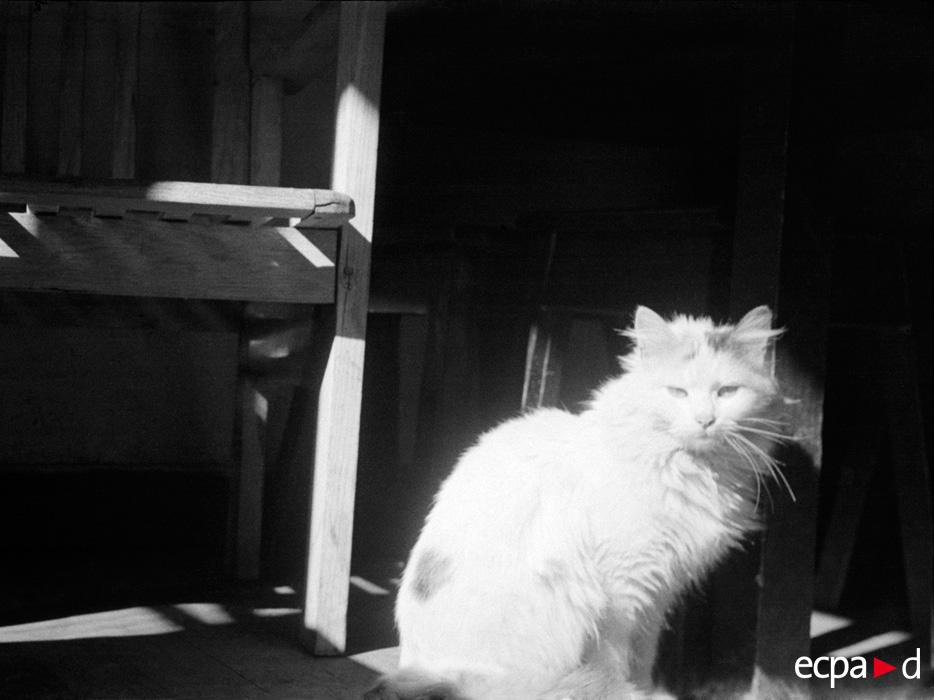 0615 Кошки на войне