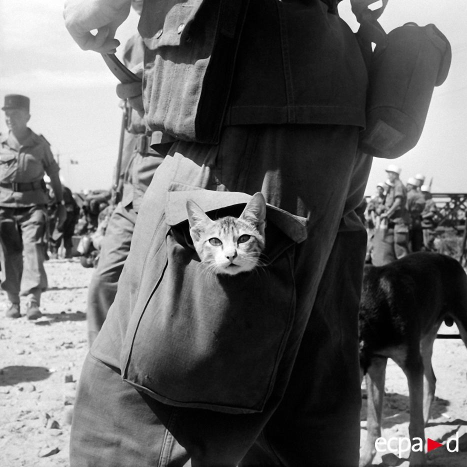 0715 Кошки на войне