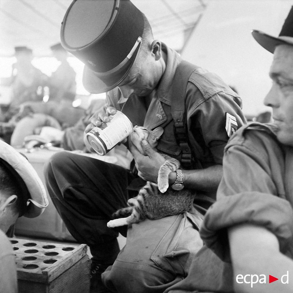 086 Кошки на войне