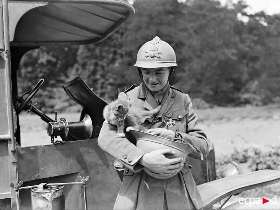 095 Кошки на войне