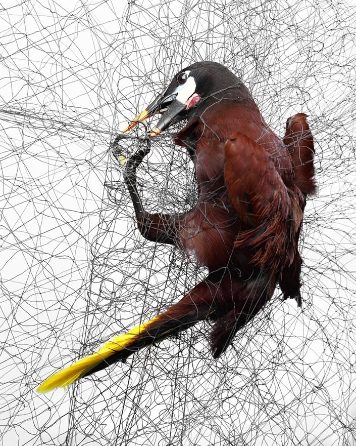 1018 Доставка птицы