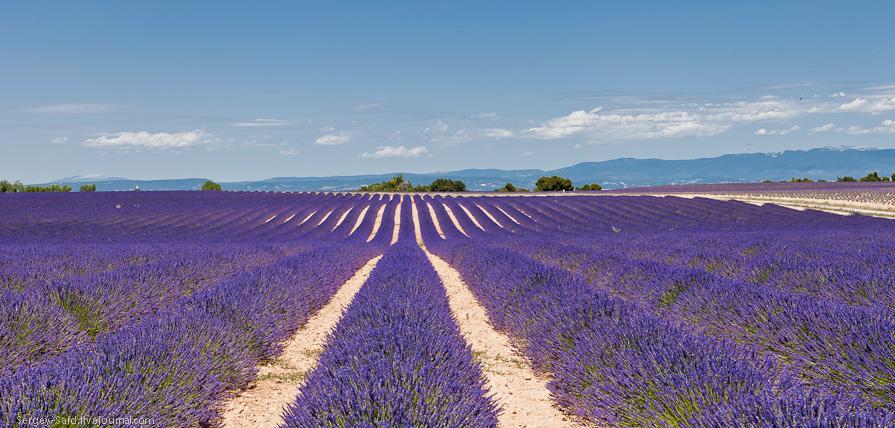 1034 А в Провансе лавандовые поля цветут