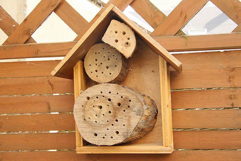 1035 Добро пожаловать в пчелиный отель!