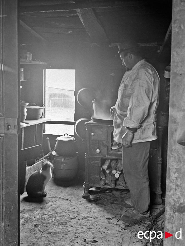1041 Кошки на войне