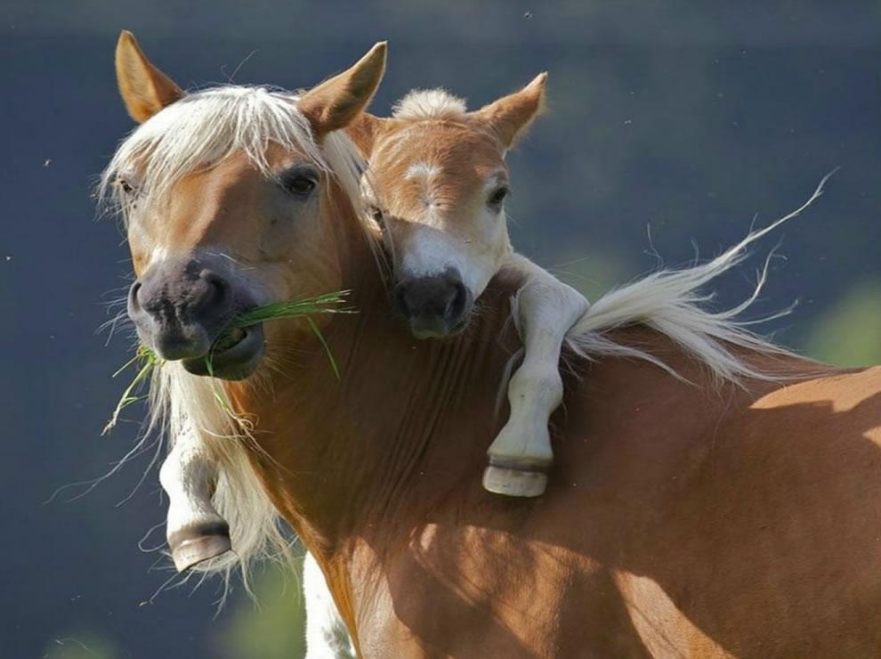 106 Животный мир: Мамина любовь