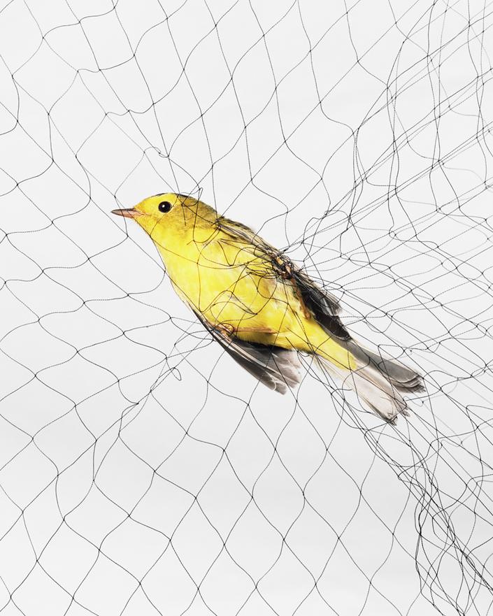 1120 Доставка птицы