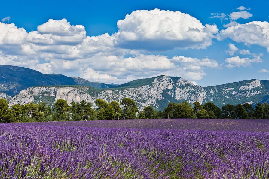 1145 А в Провансе лавандовые поля цветут