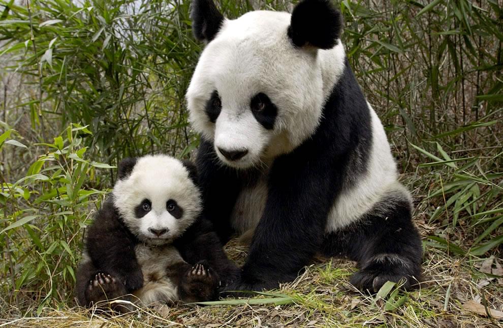 116 Животный мир: Мамина любовь