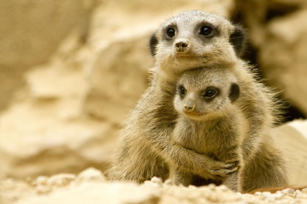 117 Животный мир: Мамина любовь