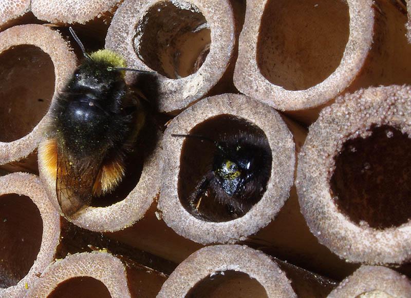 1233 Добро пожаловать в пчелиный отель!