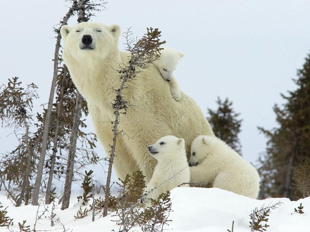 125 Животный мир: Мамина любовь