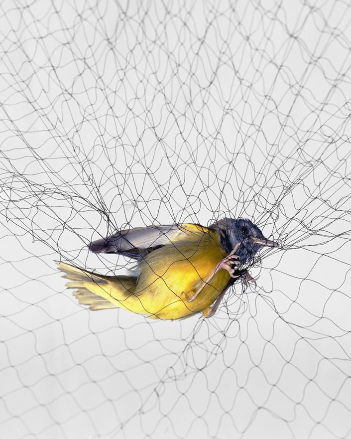 1315 Доставка птицы