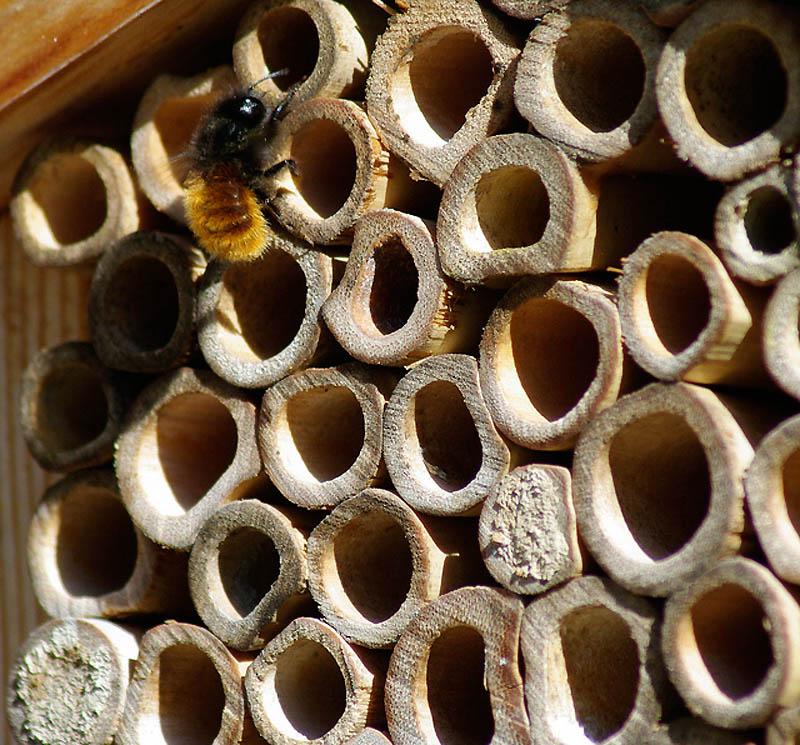 1330 Добро пожаловать в пчелиный отель!