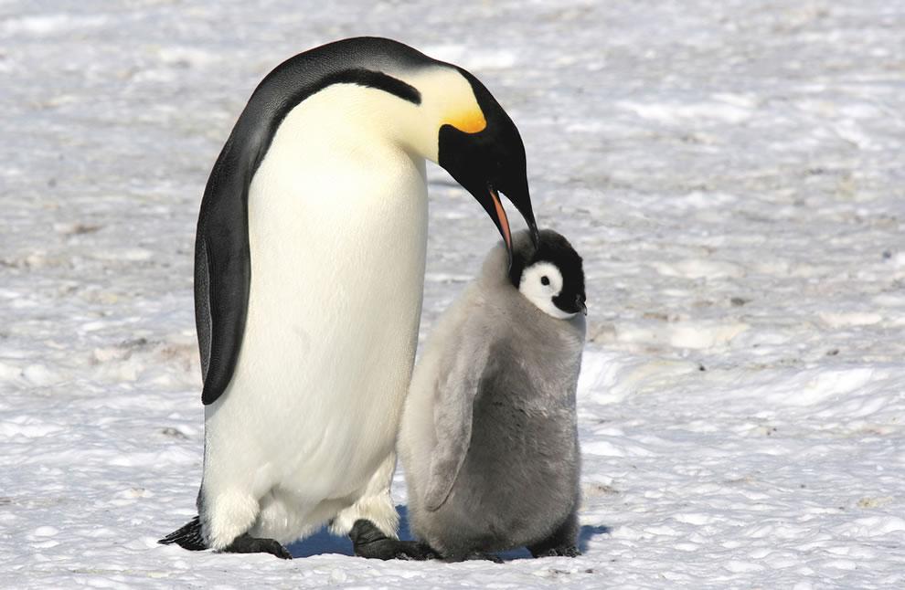 134 Животный мир: Мамина любовь