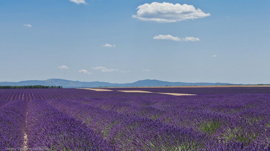 1428 А в Провансе лавандовые поля цветут