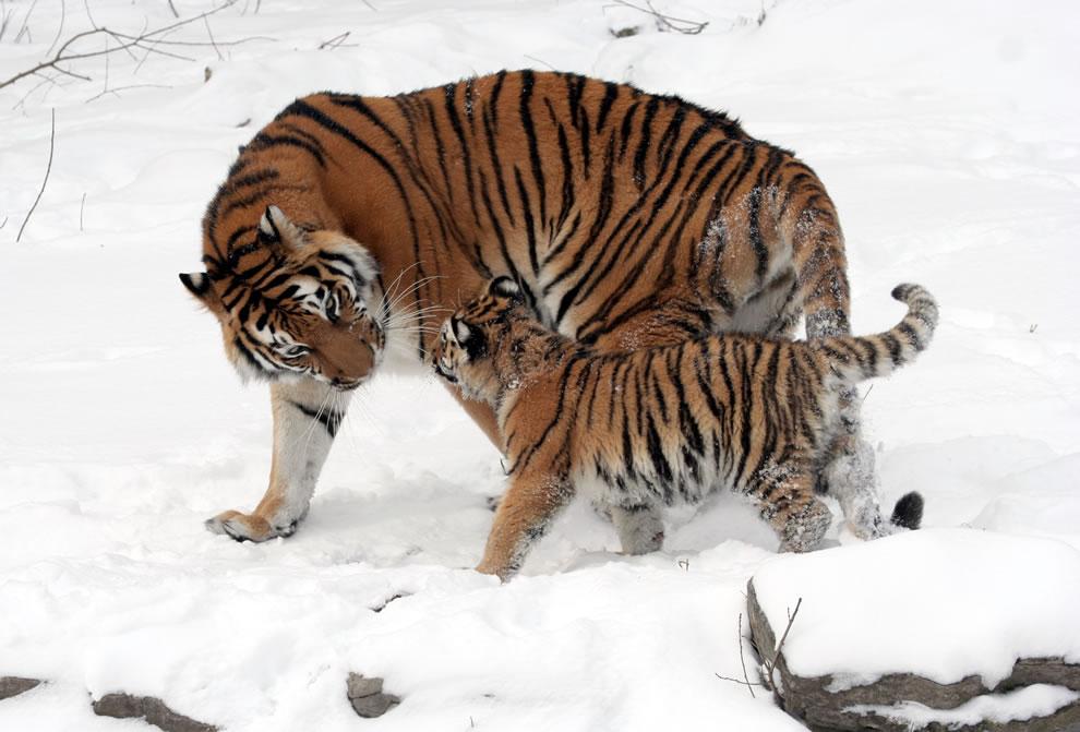 144 Животный мир: Мамина любовь