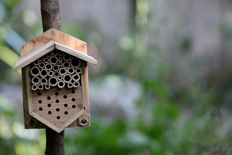 1527 Добро пожаловать в пчелиный отель!