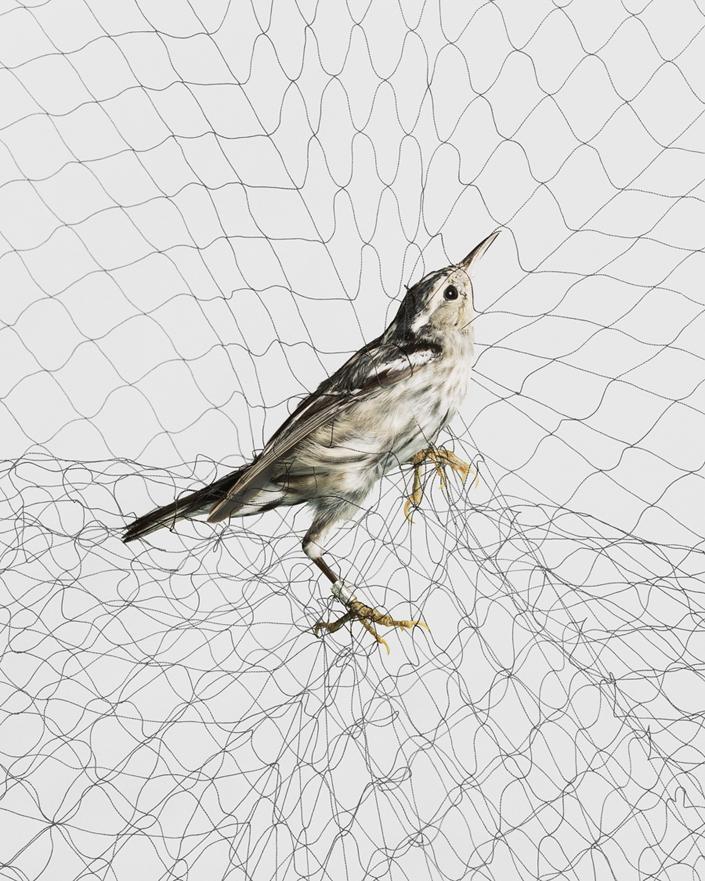 1611 Доставка птицы
